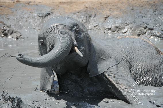 bebe-elephant